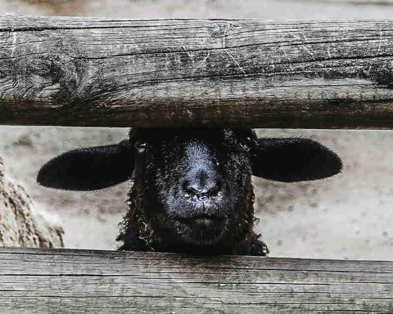 Etat, działalność gospodarcza czy MLM - czarna owca